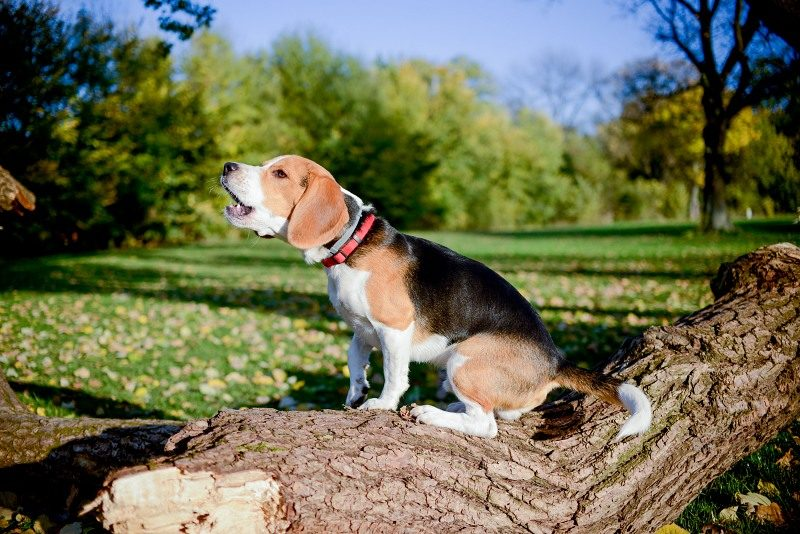 Wireless dog fence - Post Thumbnail